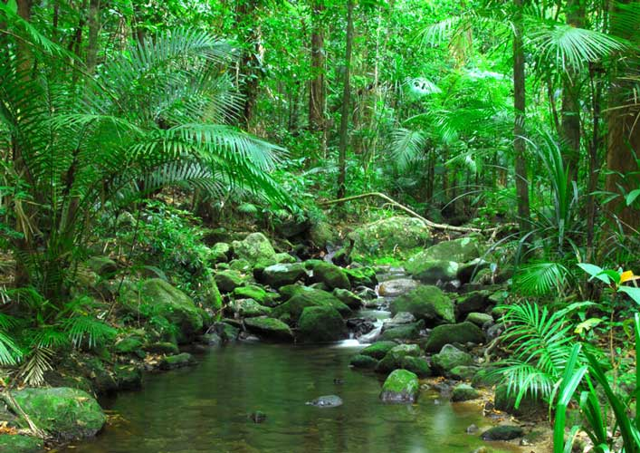 Daintree - New Zealand